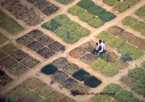 Principios de economía ecológica... Arthus Bertrand